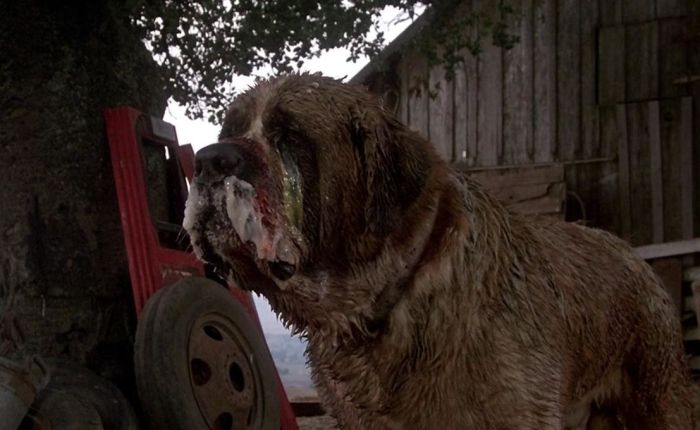 Day 21- 31 Days of Halloween- Cujo(1983)
